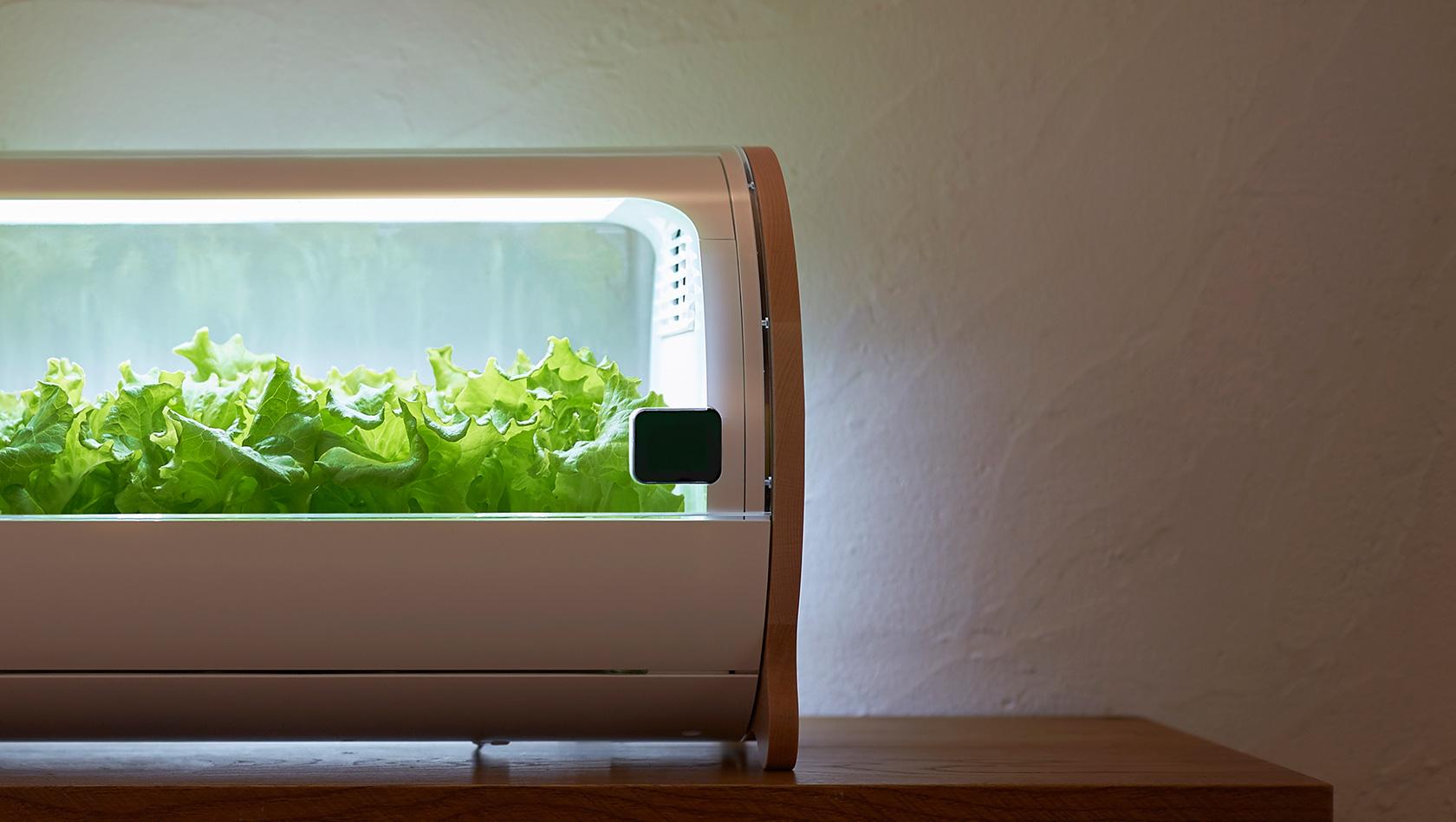 Frischer Salat gefällig? (Foto: Foop)