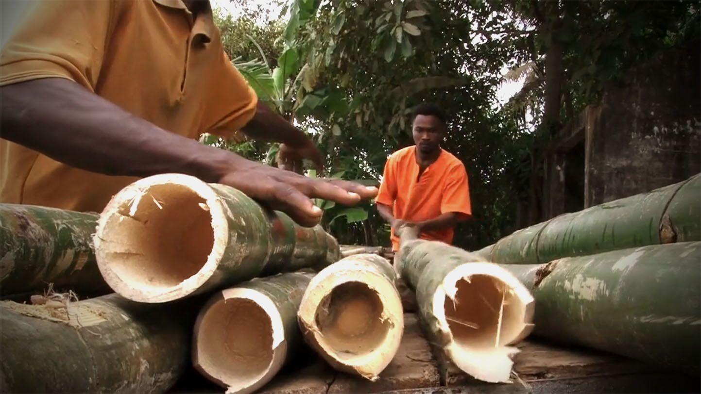 Aus Bambus wird eine bessere Welt? (Foto: Ankobra Farms)