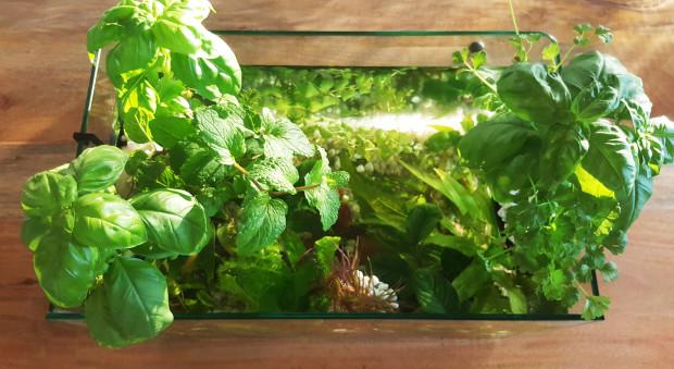 Garten von oben. (Foto: homeecology)