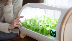 Dem Gemüse beim Wachsen zuschauen. (Foto: Foop)