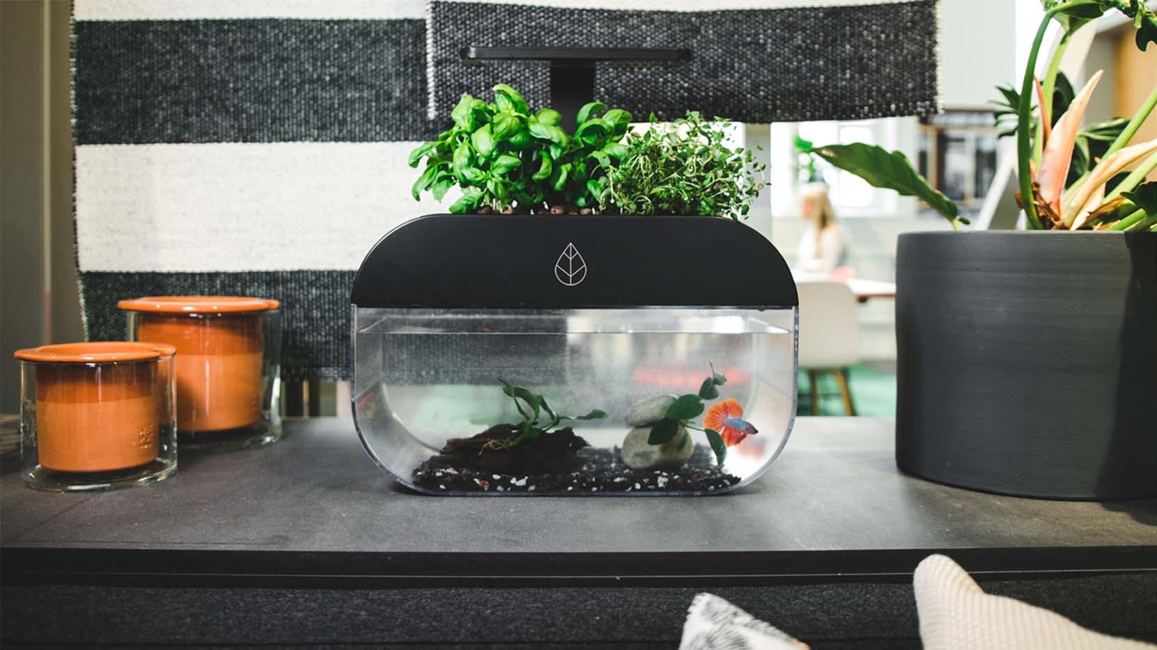 Das ist mehr als nur ein Aquarium. (Foto: Ecobloom)