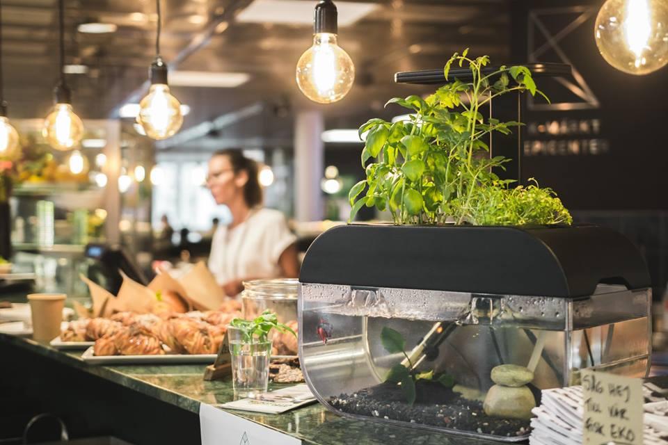 Der EcoGarden könnte auch in der Küche stehen. (Foto: Ecobloom)