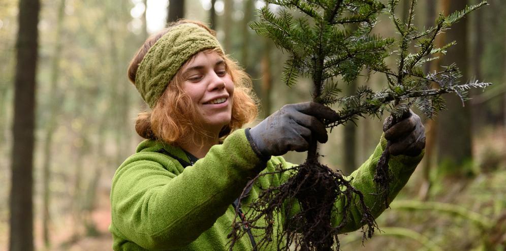 Spendet euren Weihnachtsbaum, bevor er ein Baum wird. (Foto: bergwaldprojekt.de)