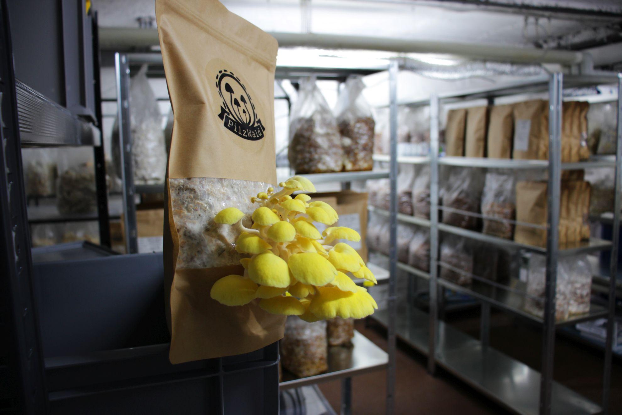 Die PilzBox ist ein Produkt der Kölner Pilzmanufaktur. (Foto: PilzWald Pilzmanufaktur)
