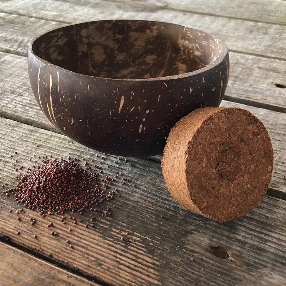 Behälter, Saatgut und Erde - das genügt für den Anbau. (Foto: Grow-Grow Nut)