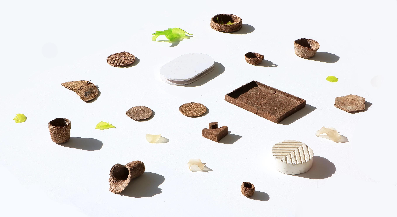 Aus Kiefernnadeln entsteht eine Plastik-Alternative. (Foto: Gaurav MK Wali)