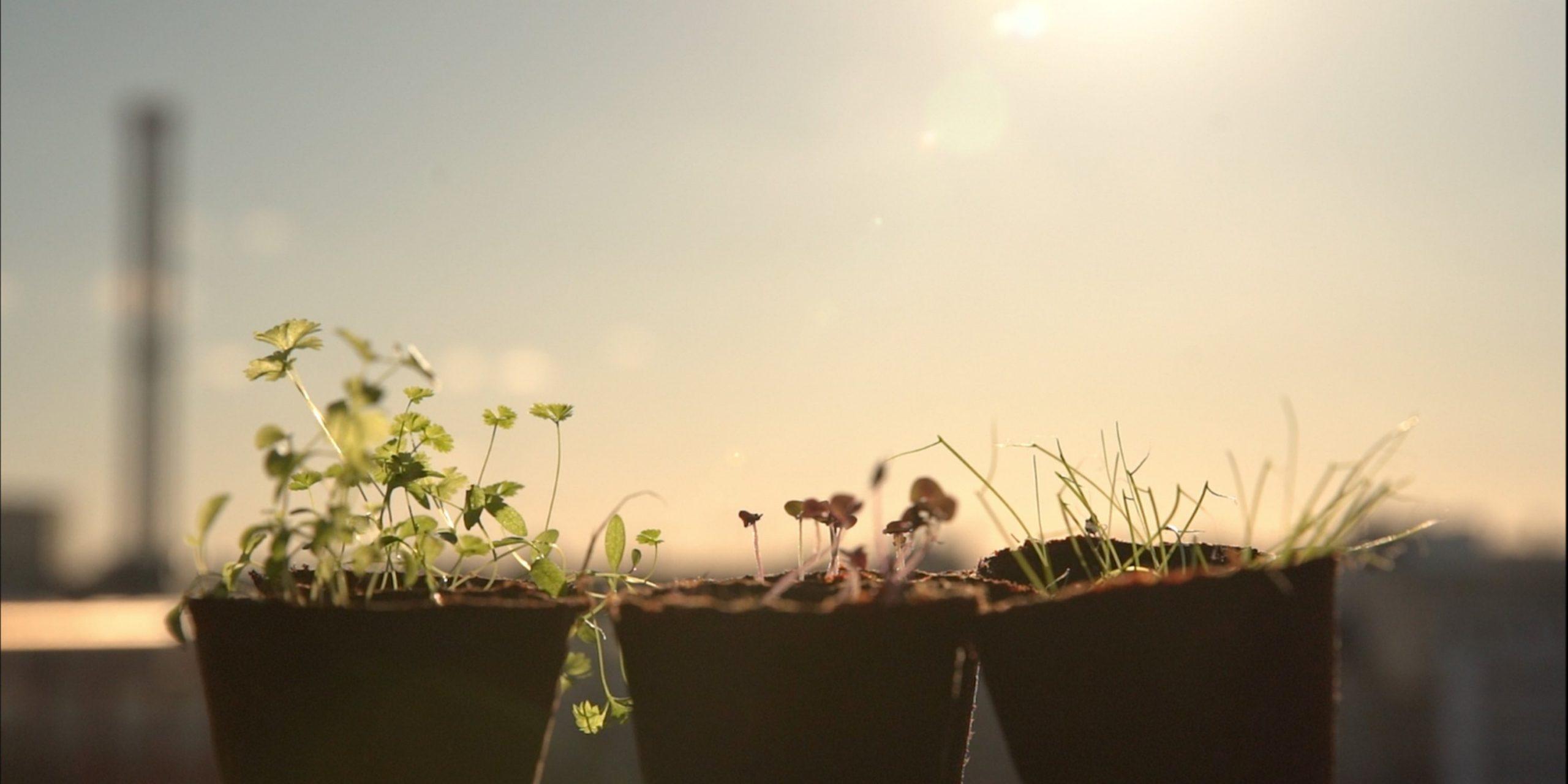 Grüneo macht das Pflanzen noch einfacher. (Foto: Grüneo)