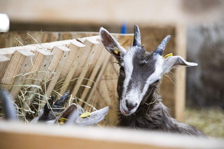 Zu Beginn soll ein Ziegenhof auf Bio umgestellt werden. (Foto: Embauerment)